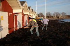 2011: Kystsikringen holdt til novemberstormen - men der måtte ryddes tang