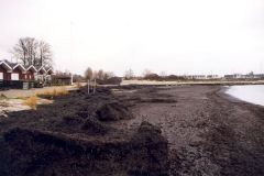 2001: Bjerge af tang, der skulle ryddes før broen kunne komme ud